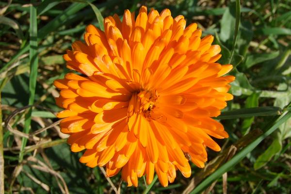 Associer fleurs et légumes pour protéger votre jardin - Tout allant ...